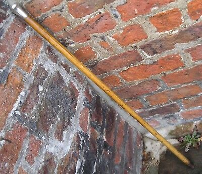 Antique gentlemans malacca walking cane stick silver pommel handle swagger stick