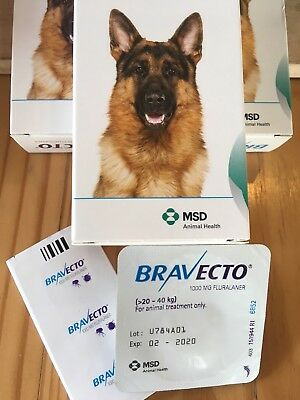 1 Chew Bravecto for Large Dogs 20-40 kg Blue Pack Exp 02-2020 Free Shipping