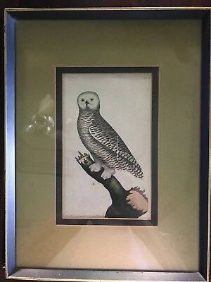 F.P.Nodder Snowy Owl Antique Hand Coloured Copper Engraving 1790