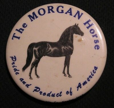 """VINTAGE MORGAN HORSE PIN """"PRIDE AND PRODUCT OF AMERICA"""" Equestrian -  2 3/16"""""""