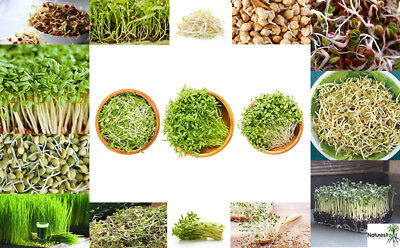 Organic Sprouting Seeds - All Varieties - Sprout | Microgreens | Choose Type