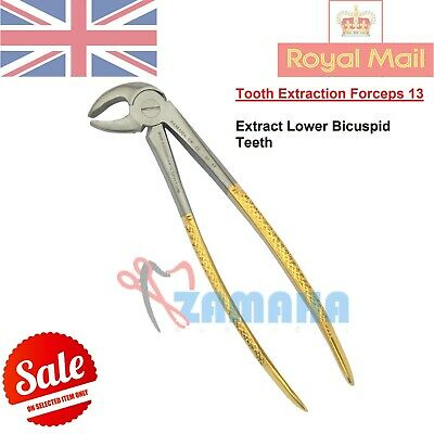 Tooth Extracting Forceps Roots & Molar #13, Lower Teeth Removal Plier Gold Color