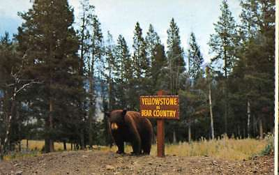 Yellowstone National Park Wyoming Bear Country Vintage Postcard B432967