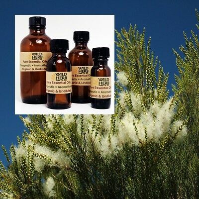 TEA TREE ESSENTIAL OIL |Organic, Pure, Undiluted| Wholesale Prices | .5 to 32 oz