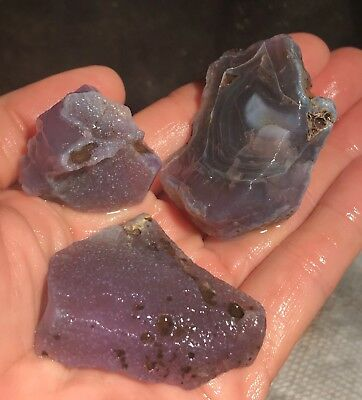 Rare Holley/Holly Blue Agate Rough from Oregon!