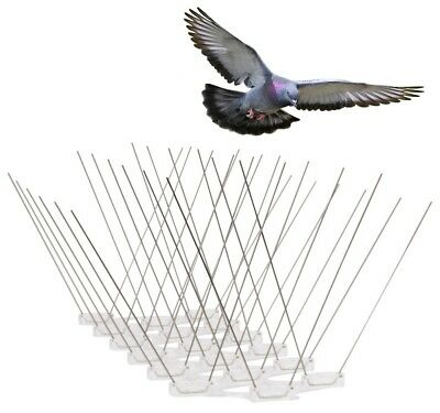 ANTI BIRD SPIKES EXTRA WIDE * 1 METRE * Stainless Steel Polycarbonate Base