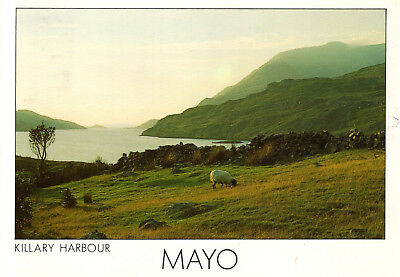 Ireland - Killary Harbour - A magnificent fjord-like arm of the sea (Co. Mayo)