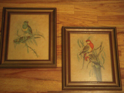 Pair Framed 1940's Processed on Wood By Nostra Parrot Pictures