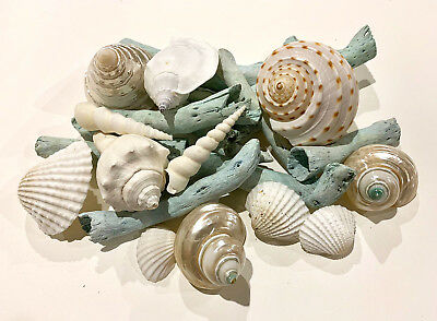 Shells White, Pearl & aqua drifwoods for craft project/wedding/home decoration.