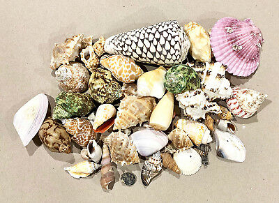 SHELLS ASSORTED  For Craft, Table Scatter, Wedding and Home decoration.