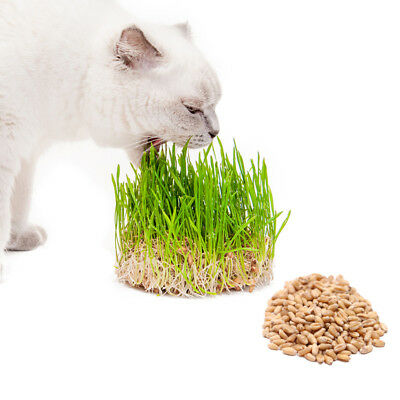 150g UK Grown Organic Oat Wheat Raw Barley Cat Grass Seeds Easy Grown Your Own