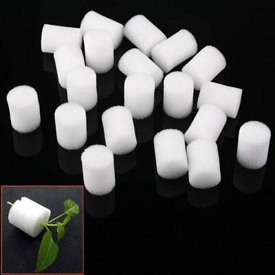 10/20 Lots Clone Cloning Collar Foam Insert Hydroponic Root Guard Mesh Pot White