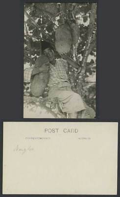 Singapore Old Real Photo Postcard Jackfruit Jack Nangka Tree Malay Boy Young Man