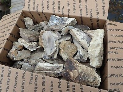 Blue Forest Petrified Wood,Flat Rate Box over 11lbs,Teacher,Collection,Specimen