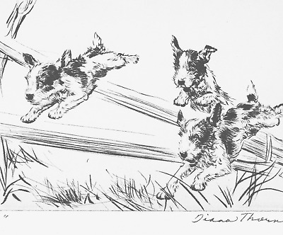 "Vintage Dog Print by Diana Thorne Fox Terriers Dog Art ""Rats"" Original Plate"