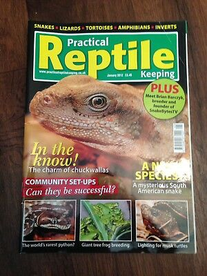 Practical Reptile Keeping Magazine - Jan 2012 - In The Know - Chuckwallas