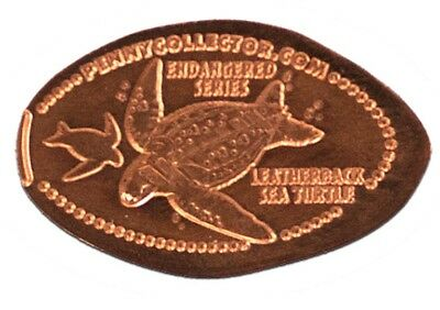 Rare Leatherback Sea Turtle Endangered Species Elongated Copper Penny