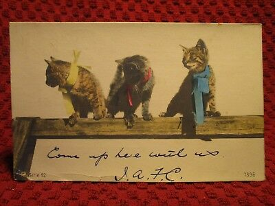Rppc Early 1900's. 3 Cats On 2X4, Menlopa, Calif. Postcard H11