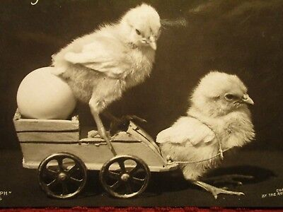Rppc Early 1900's. Baby Chicks At Work. Chick Toy Cart. Postcard H11