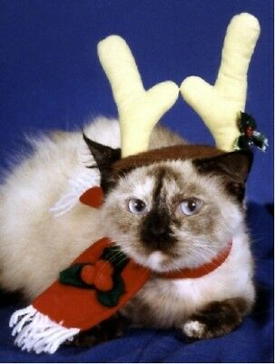 Pet Christmas Cards:Cat Reindeer