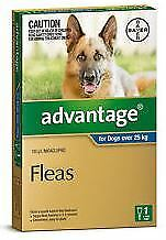 Advantage for Extra Large Dogs over 25kg Single Dose pack