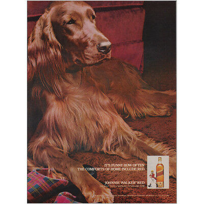 1981 Johnnie Walker Red: Comforts of Home Include Red Vintage Print Ad