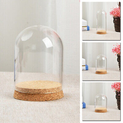 Glass Display Bell Jar Dome Cloche Xmas Gift Desk Decor Vintage With Wooden Base