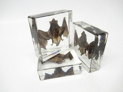 Bat in Lucite, Resin, Taxidermy