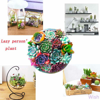 400pcs Mixed Succulent Seeds  Rare Living Stones Plants Cactus Home Plant Cute
