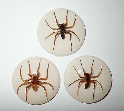 Insect Cabochon Ghost Spider 35 mm Round on white bottom 3 pieces Lot