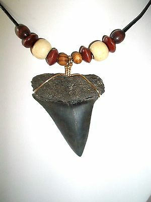 """Awesome 1 15/16"""" Mako Shark Tooth Necklace On Sale Right Now"""