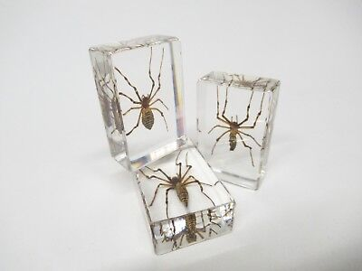 Wasp Spider in Lucite, Resin, Taxidermy