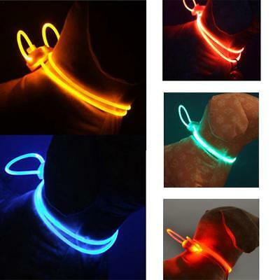 LED Glow Collar Dog Puppy Pet Tag Flashing Warning Light Leash Battery Included