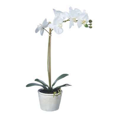 NEW Emporium Real Touch Orchids With Pot By Spotlight