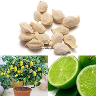 New Nice Adorable Flower Fragrant Seeds Fragrante Blooms Lime Seeds CYWV