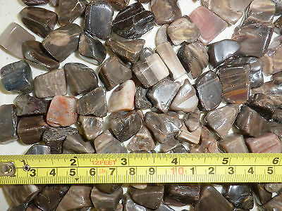 Tumbled Fossil Stone Fossil Petrified Wood small size pieces 250 gram Lot