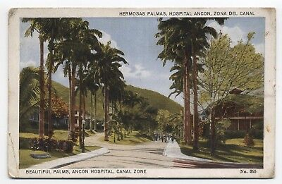 PANAMA ~ Palms near Hospital Building ANCON Canal Zone c1910 Postcard