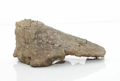 ANKYLOSAURUS Spike Scute Armor - CRETACEOUS Period Hell Creek Formation Fossil
