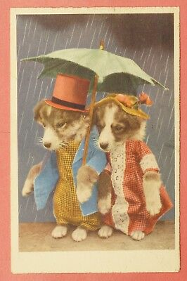 Dr Who Prexy On 1954 Pc Dressed Animals Dogs Under Umbrella Postcard 20875