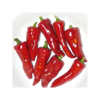 "▲ 20x Graines ""Piment basque Gorria"" BIO ▲"