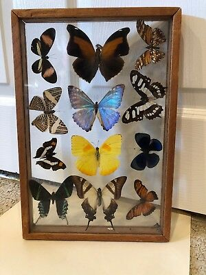 12 Beautiful Butterflies In A Two Sided Glass Frame Look!!!