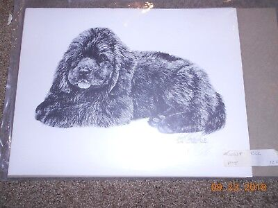 NEWFOUNDLAND Puppy Pencil Drawing Print Signed Lyn St Clair Stubbs,1990, 128/200