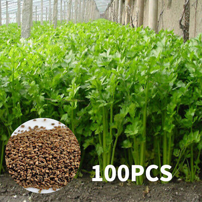 AD0E Delicious Smallage Seeds Parsley Seed Food Garden Fruits 100PCS/Bag