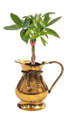 """Solid Brass Lucky Gold 5"""" Jug Small Vase for Money Tree Collection Plant Vase"""
