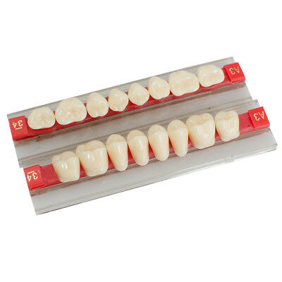 A Dental Acrylic Resin Denture Posterior Teeth Tooth Upper Lower Shade G34 A2 A3