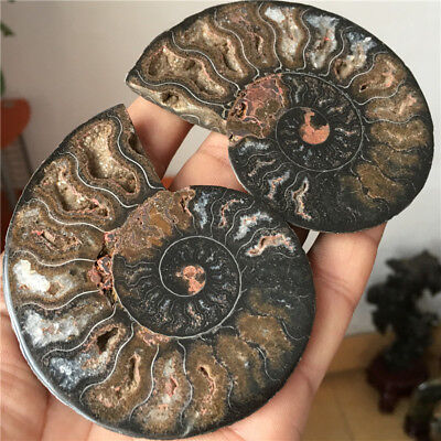 133 g Higher qulity! a pair of Natural Black Ammonite Fossil slice Madagascar