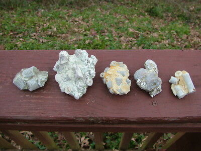 Crinoid Fossils, 5 piece lot, Pickett County Tennessee