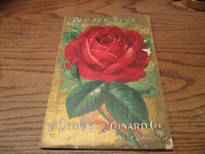 1908 Dingee & Conrad Seed & Rose Grower Color Plate!