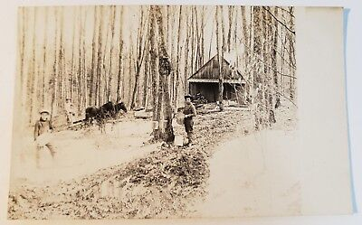 Antique Real Photo Postcard - COLLECTING MAPLE SYRUP - Great Old Photo Postcard