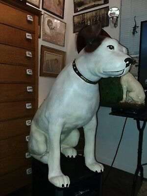 Antique Victor Phonograph Paper Mache Nipper Dog almost 3 ft. Tall